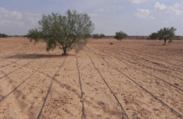 Sustainable integrated catchment management in the Maghreb (Tunisia)