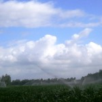 Sprinkler irrigation in Arborea
